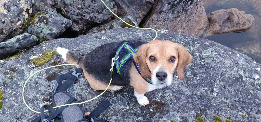 Om alle tar med seg restesnøret sitt hjem igjen kan denne søte hunden løpe fritt på fjellet uten å bekymre seg for å få snøre i labbene :)